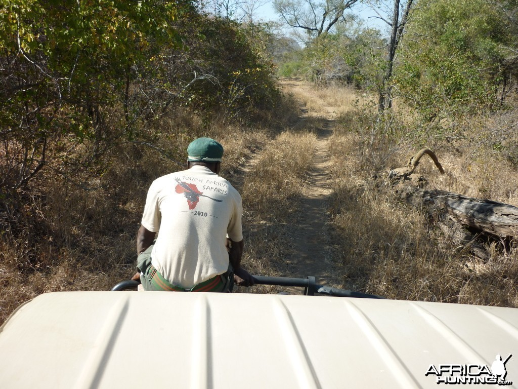Looking for fresh Buffalo tracks...