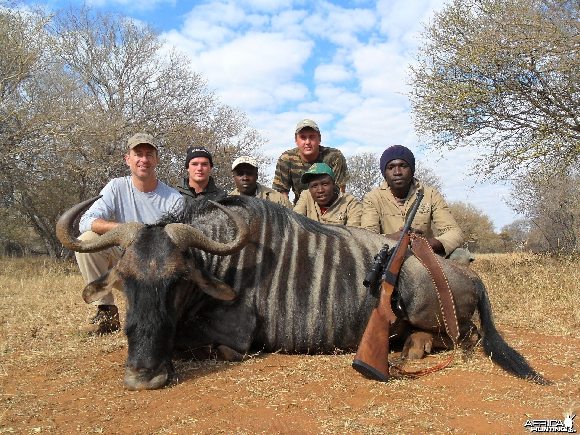 Blue Wildebeest hunt in South Africa