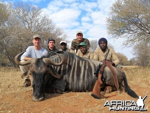 Blue Wildebeest hunt in South Africa