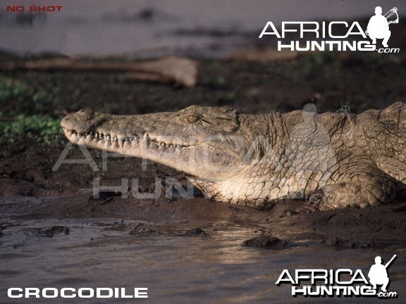 Bowhunting Crocodile Head & Neck Shot Placement