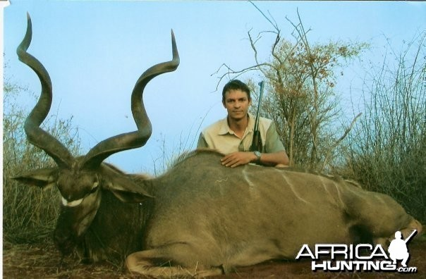 56 inch Southern Greater Kudu