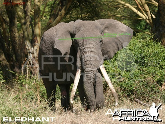 Bowhunting Elephant Front View Shot Placement