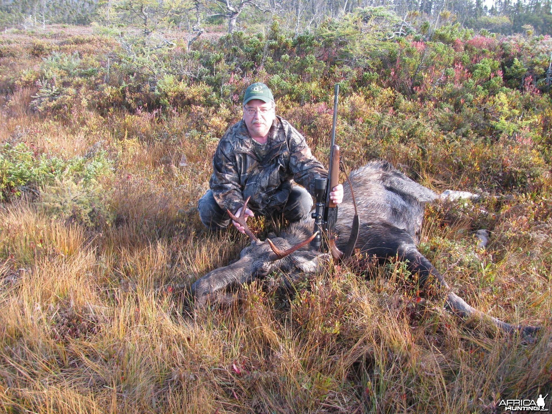 Moose chops..mmmm...yummy! Newfoundland, Canada