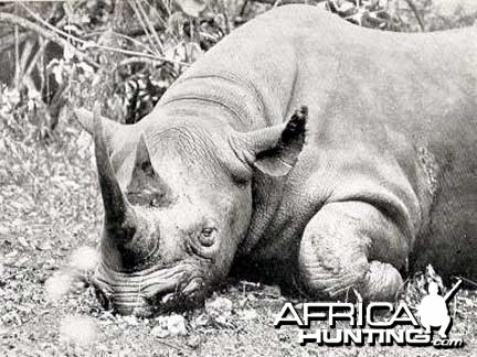 Black Rhino Hunt