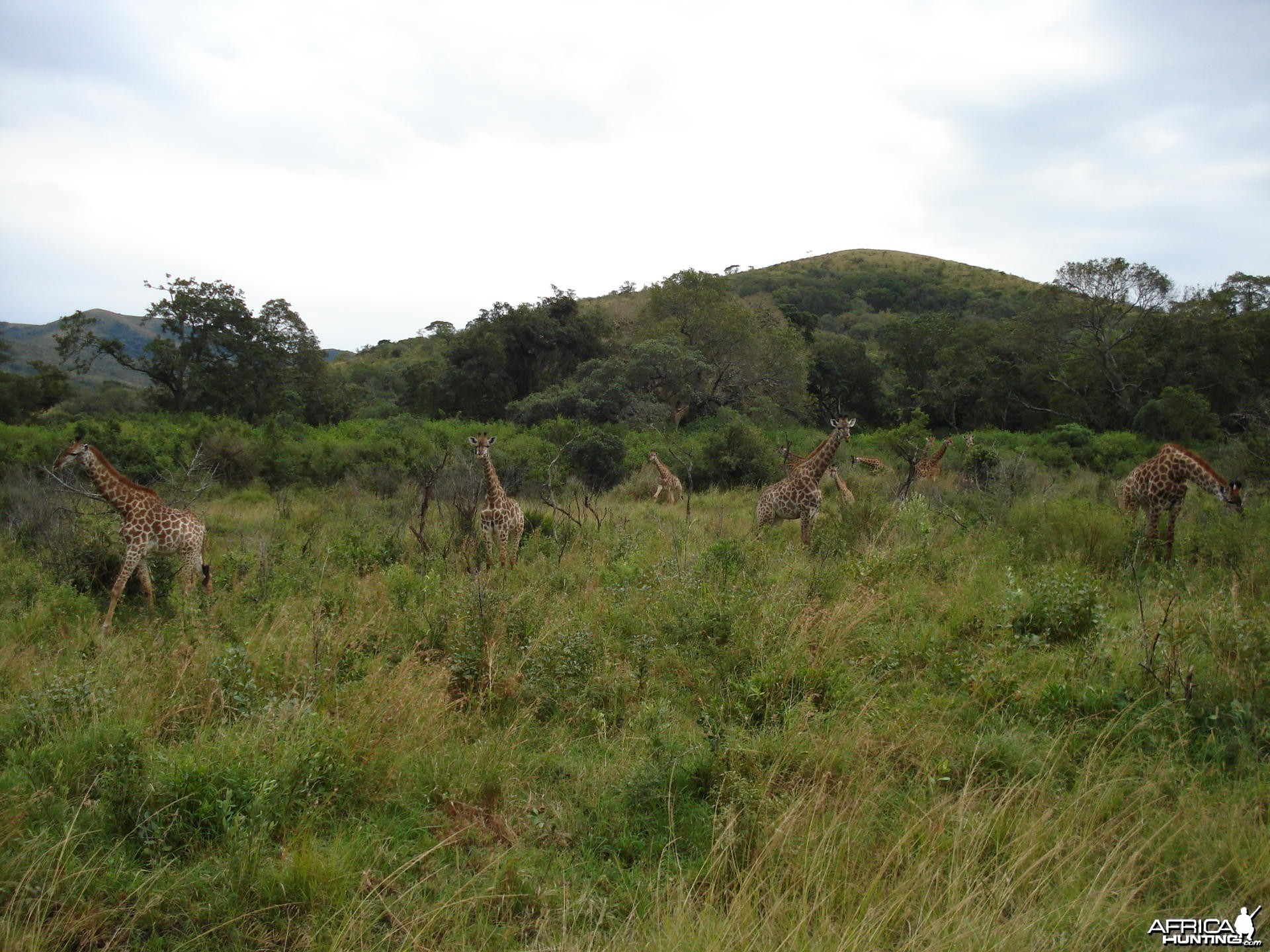 South-East of Pongola, KZN, South Africa