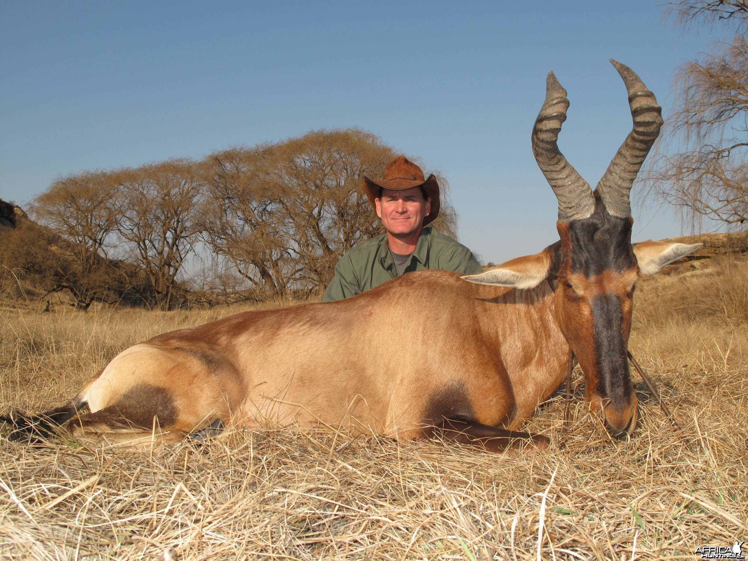 Red hartebeest, Hunting with Clients