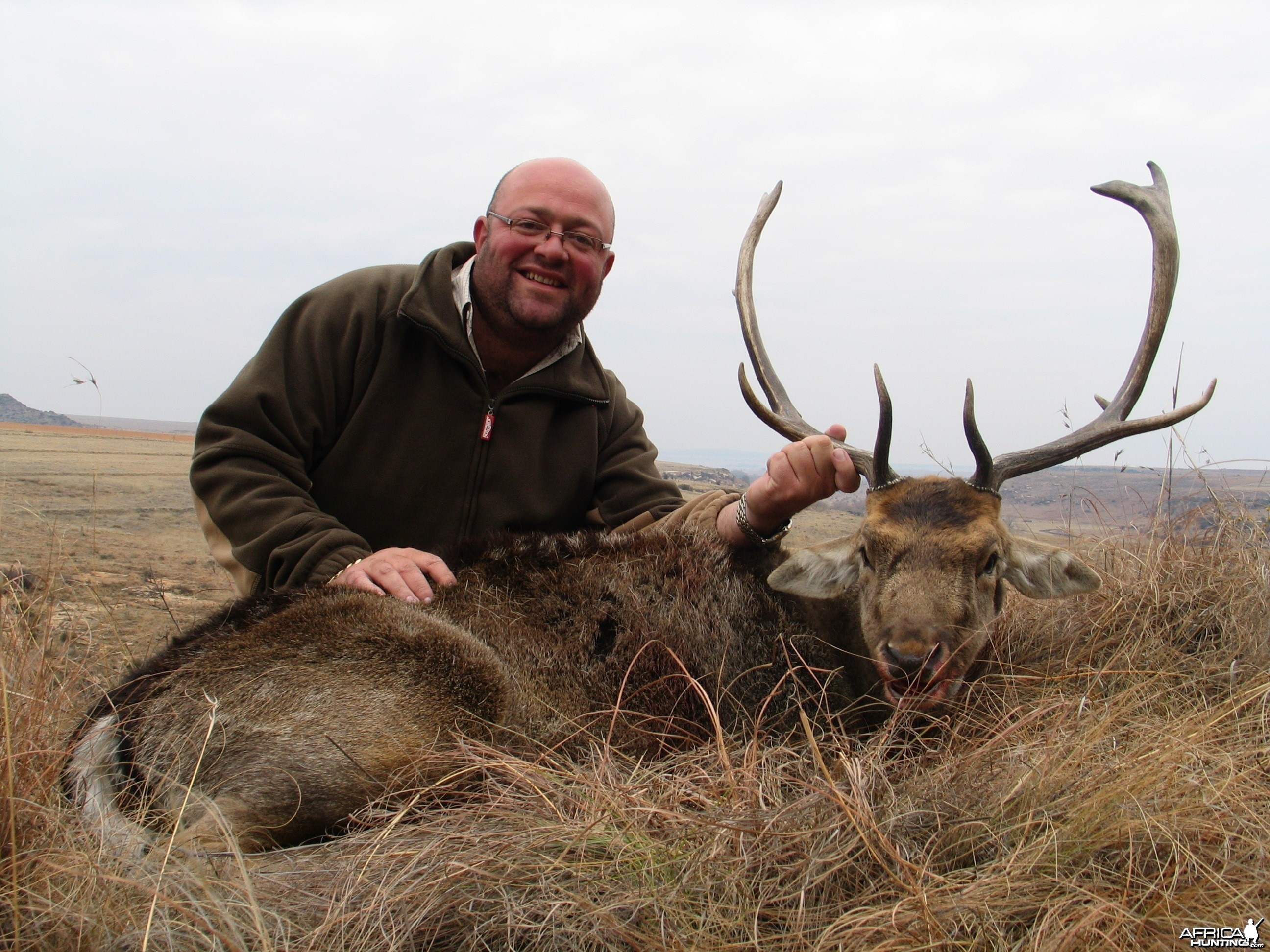 Fallow deer, Hunting with Clients