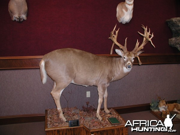 Virginia Whitetail