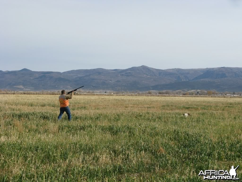Fall Pheasant Hunt, Manti, Utah USA