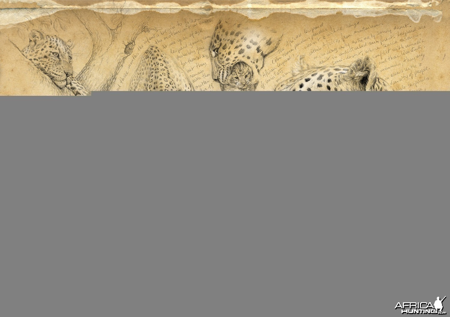 Wildlife Artist Marcello Pettineo - Leopard