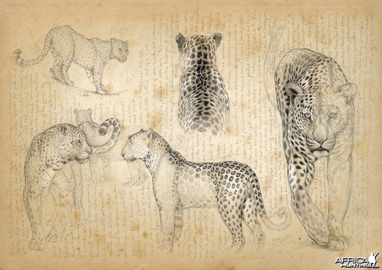 Wildlife Artist Marcello Pettineo - Leopard
