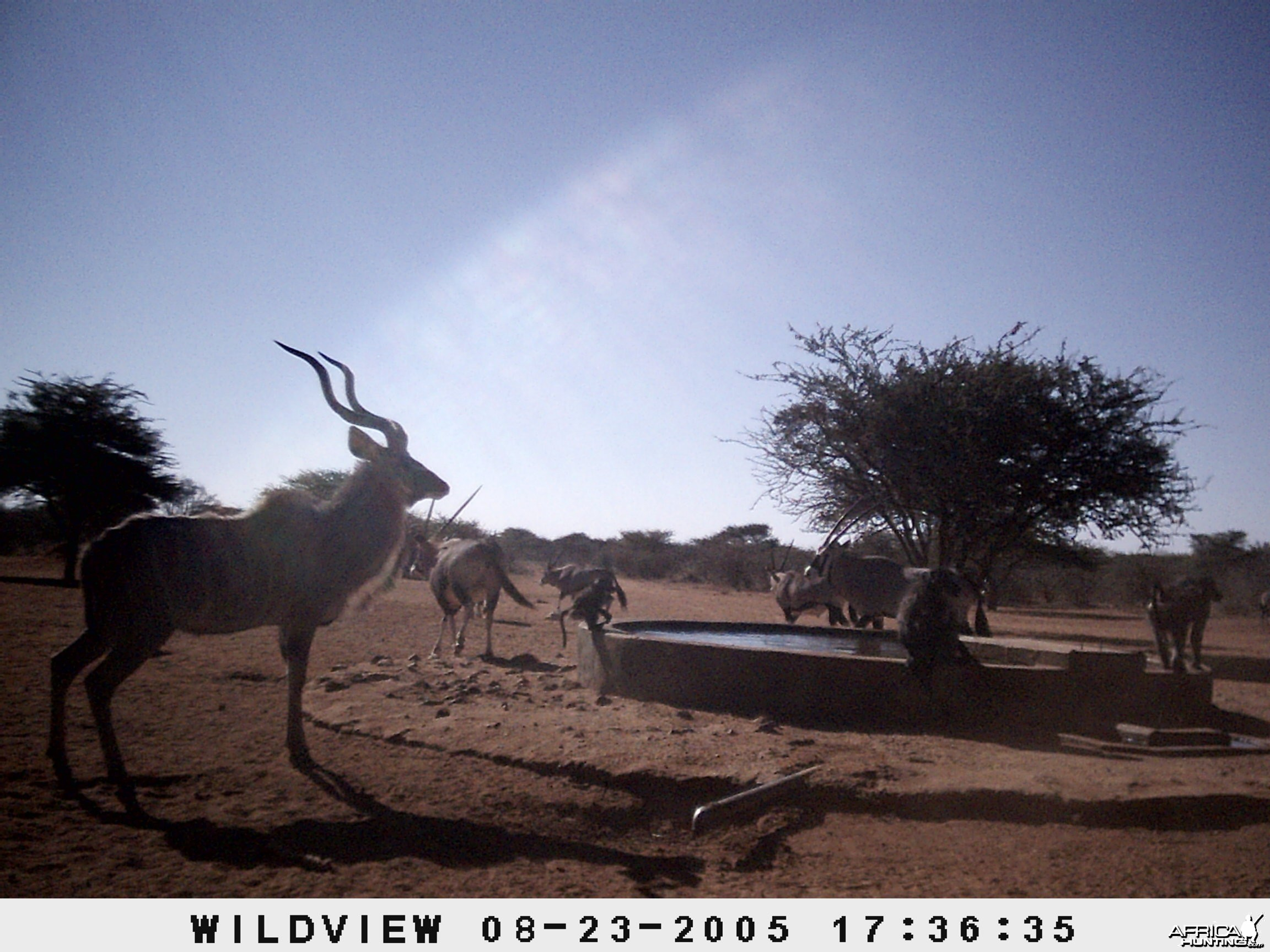 Gemsboks, Kudu and Baboon, Namibia