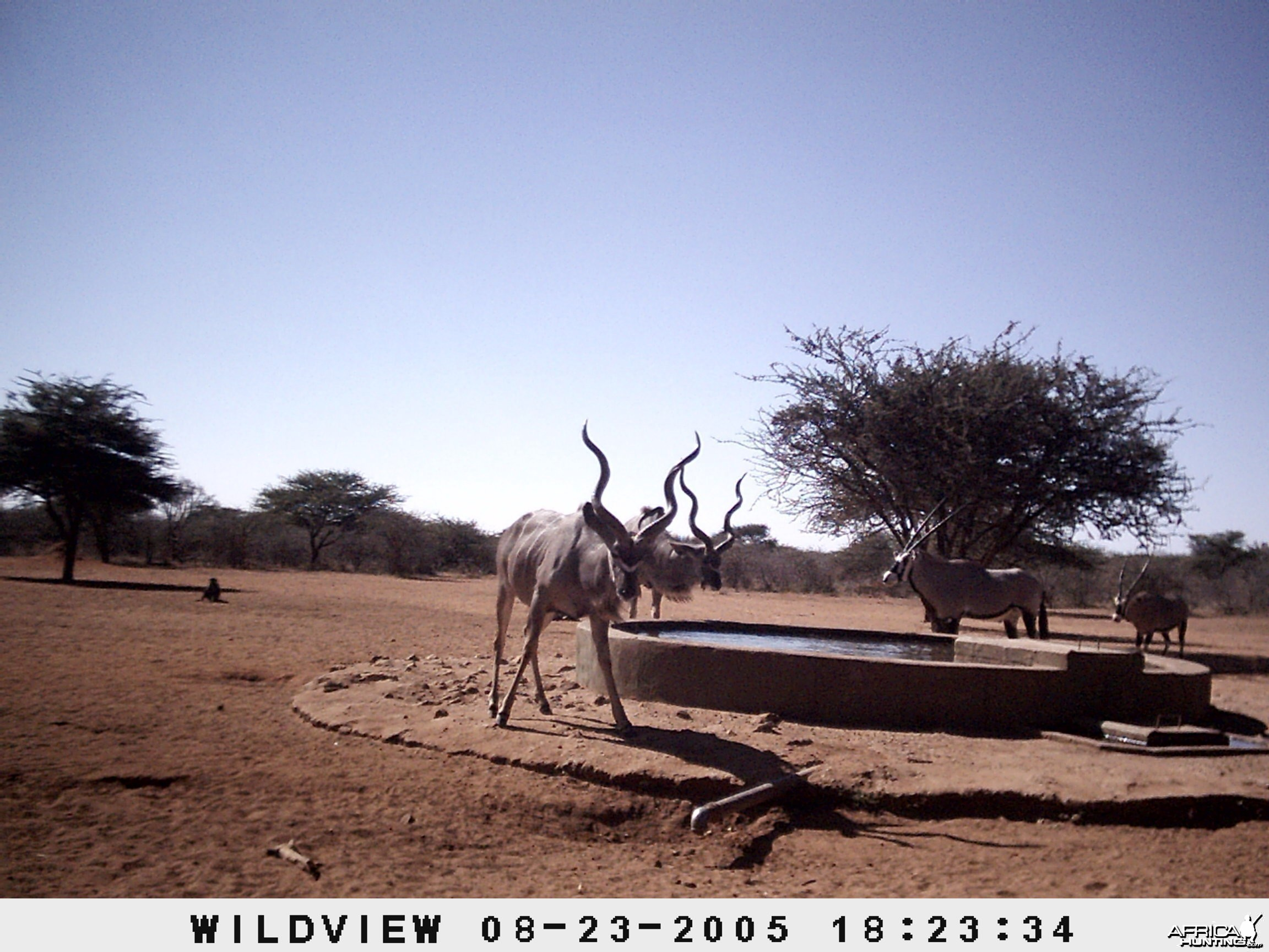 Gemsboks, Kudus and Baboons, Namibia