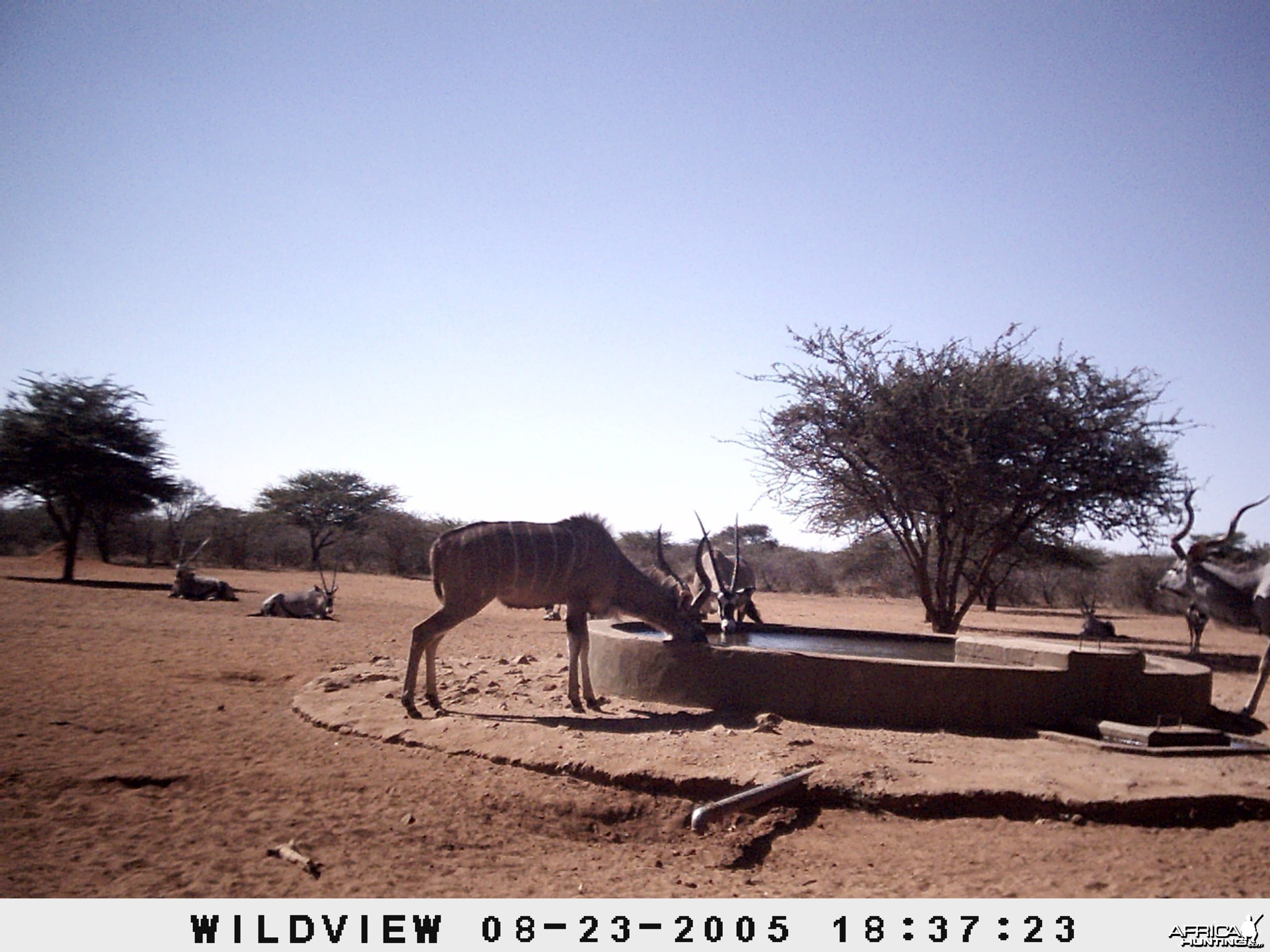 Gemsboks and Kudus, Namibia