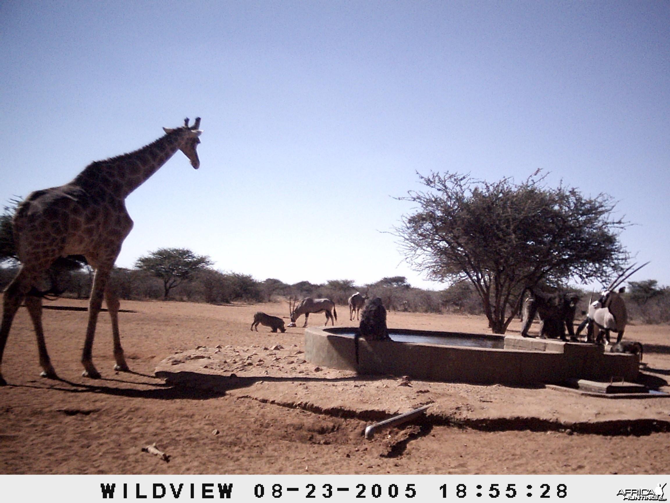 Gemsboks, Giraffes, baboons, Kudu and Baboons, Namibia