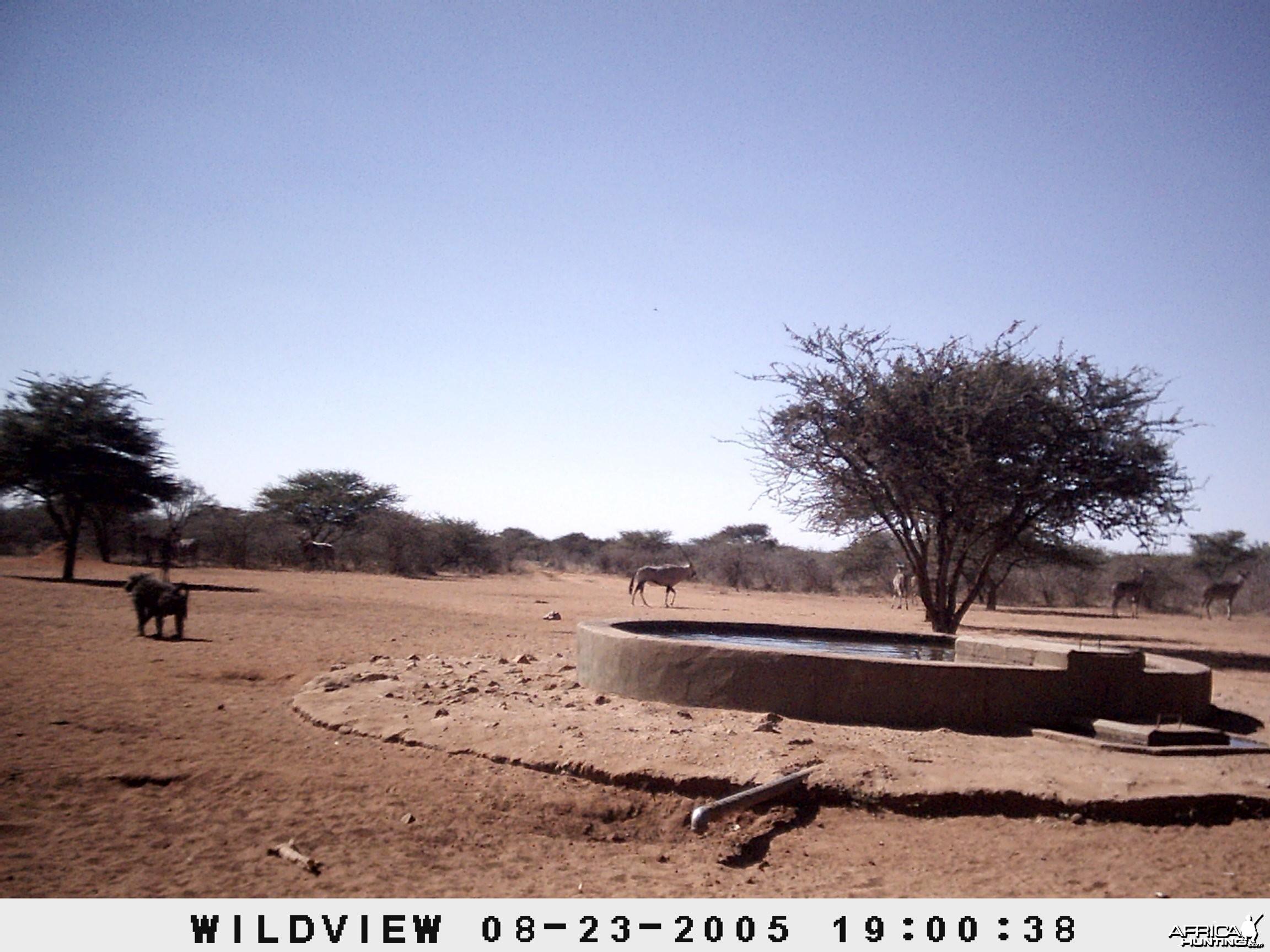 Gemsboks, Kudus and Baboons, Namibia