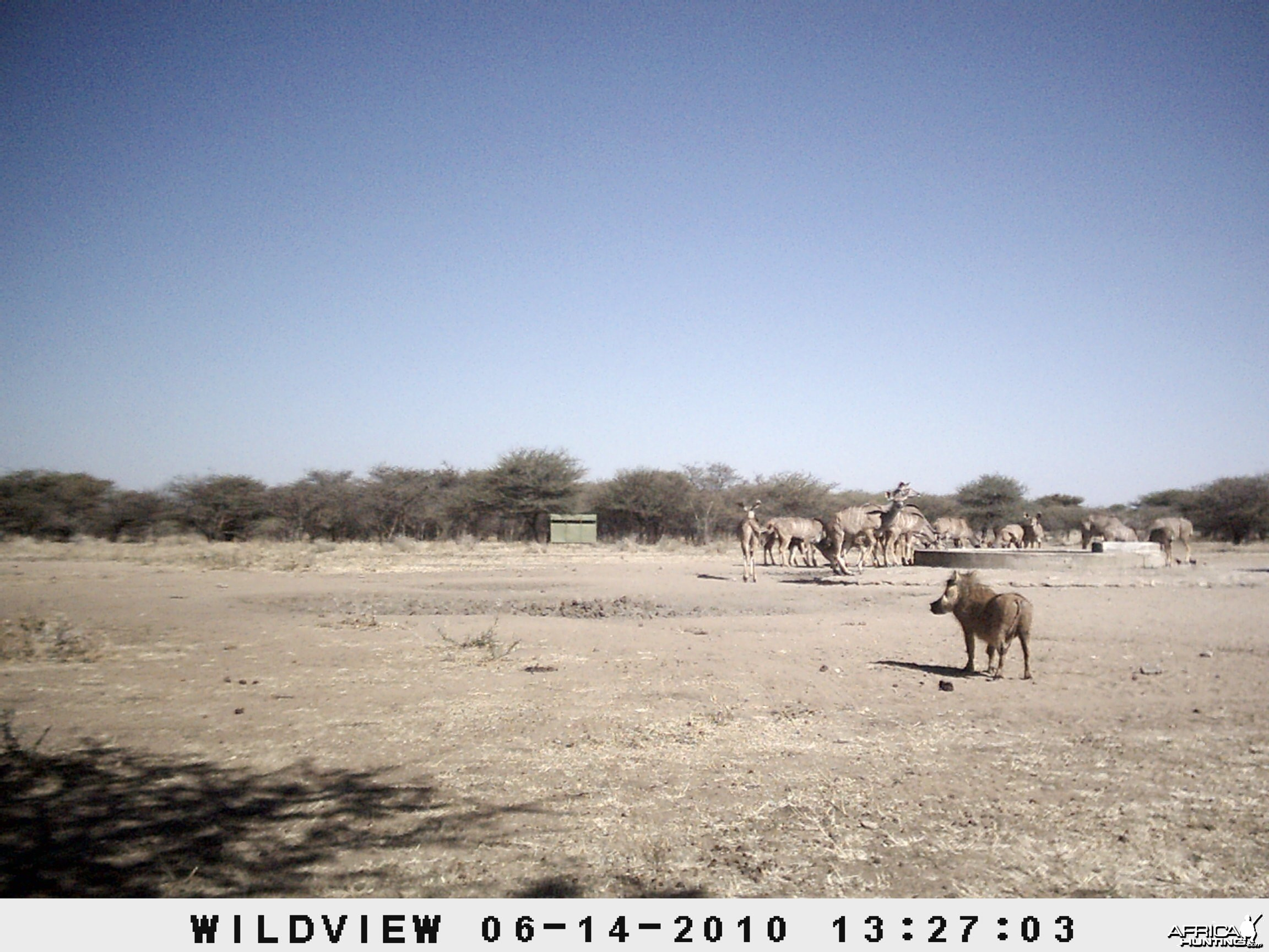 Kudus and Warthog, Namibia