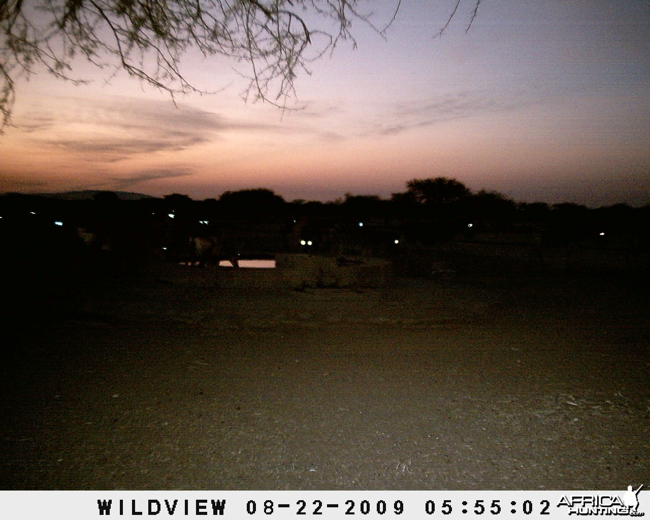 Trail cam eyes, Namibia