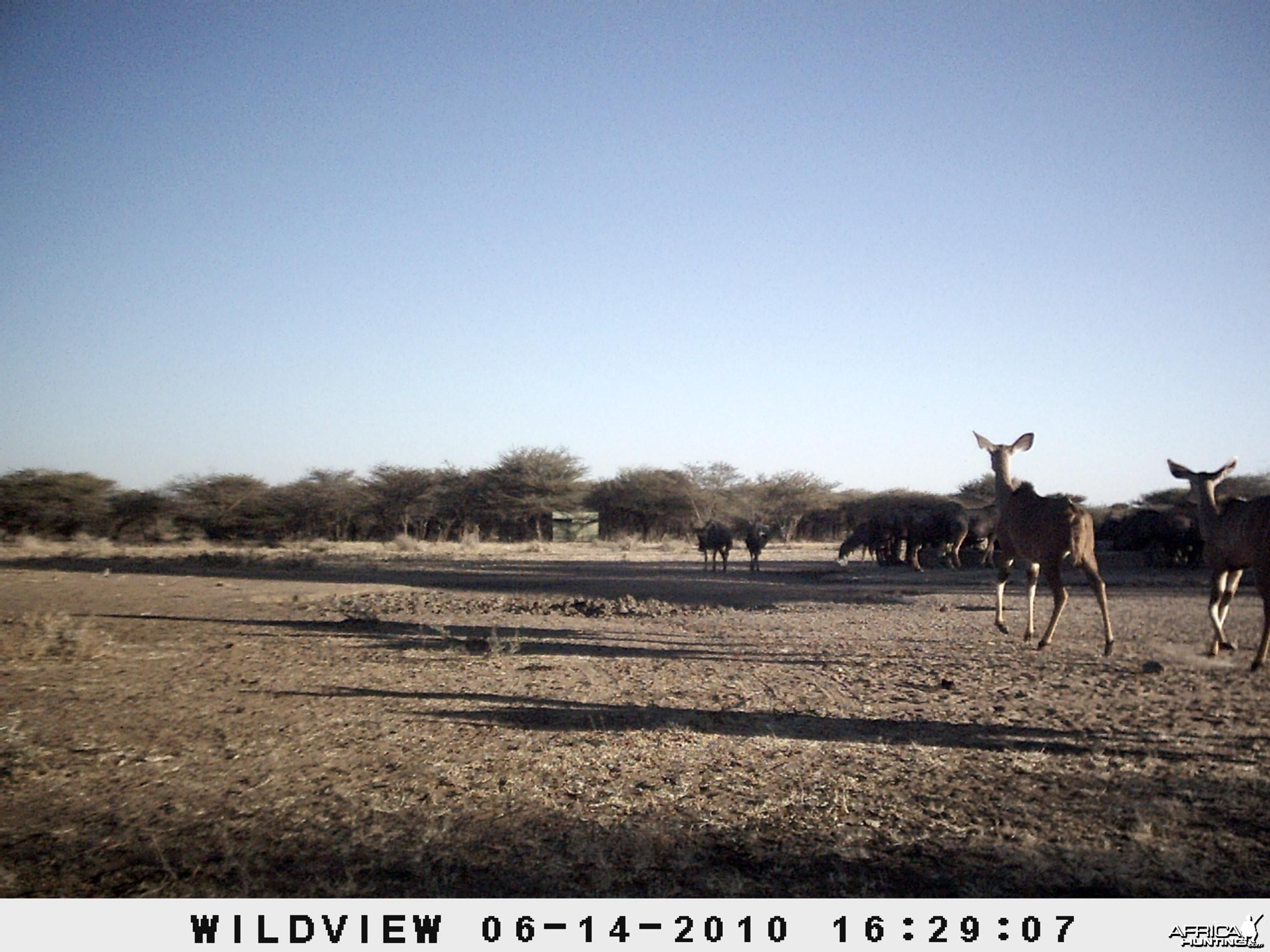 Kudus, Namibia