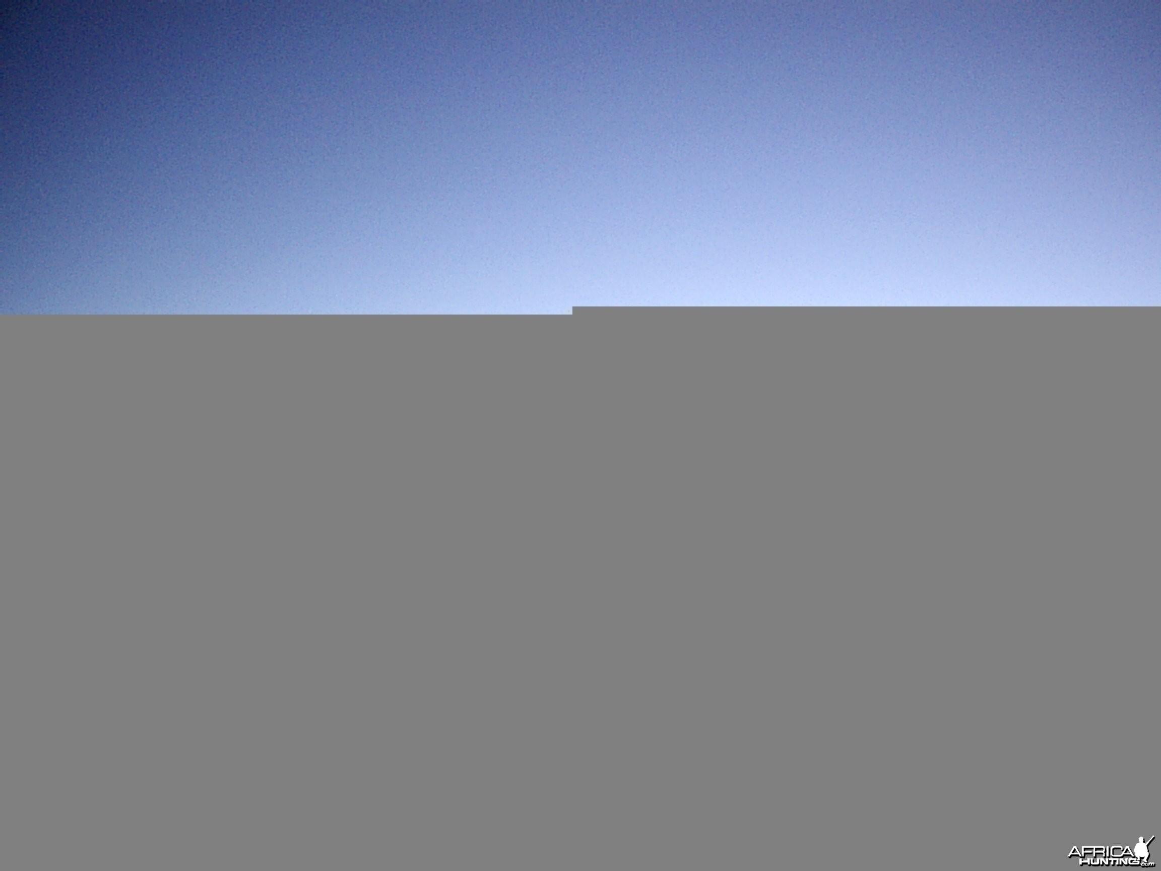 Impalas, Namibia