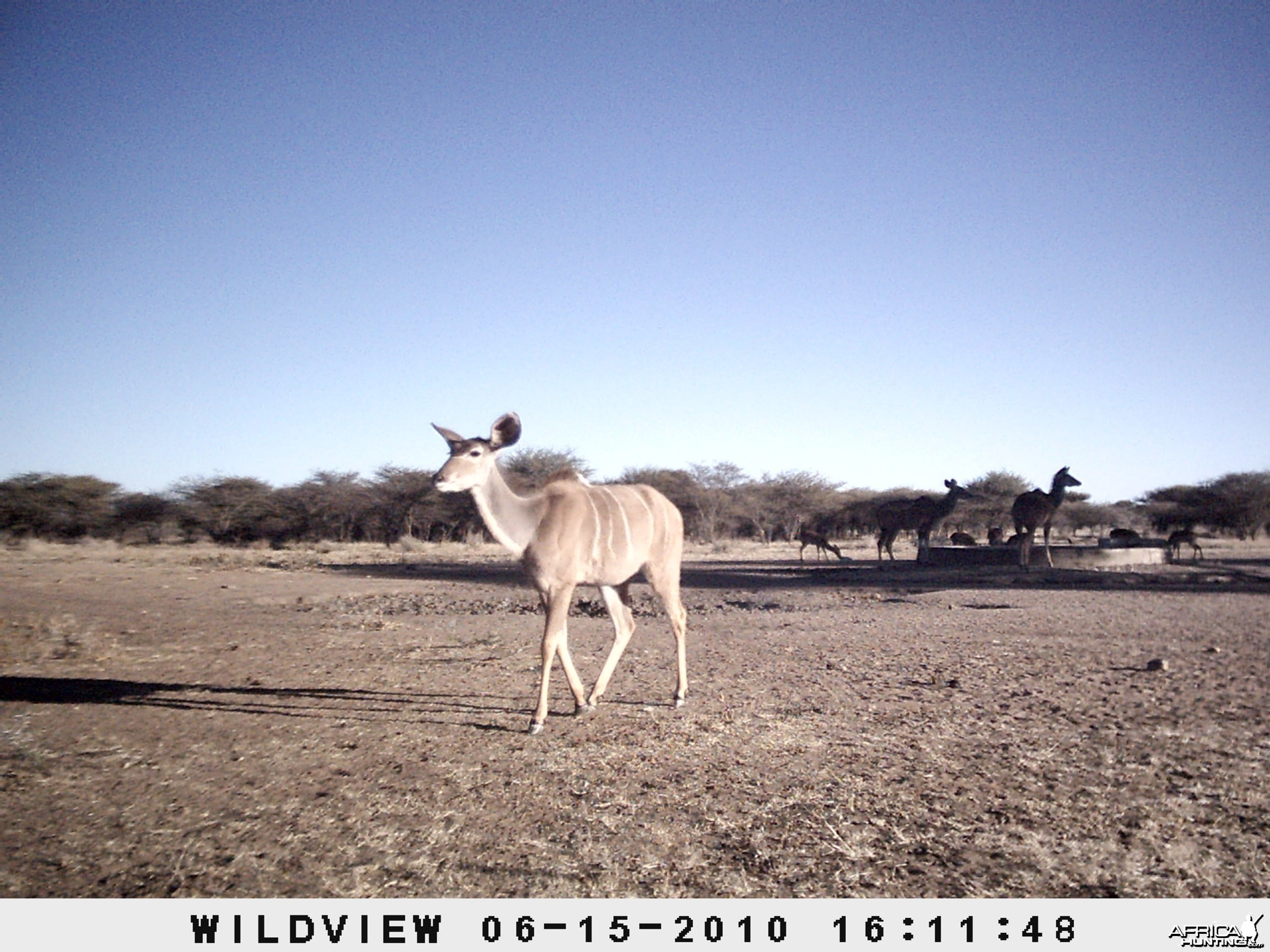 Kudu and Impala, Namibia