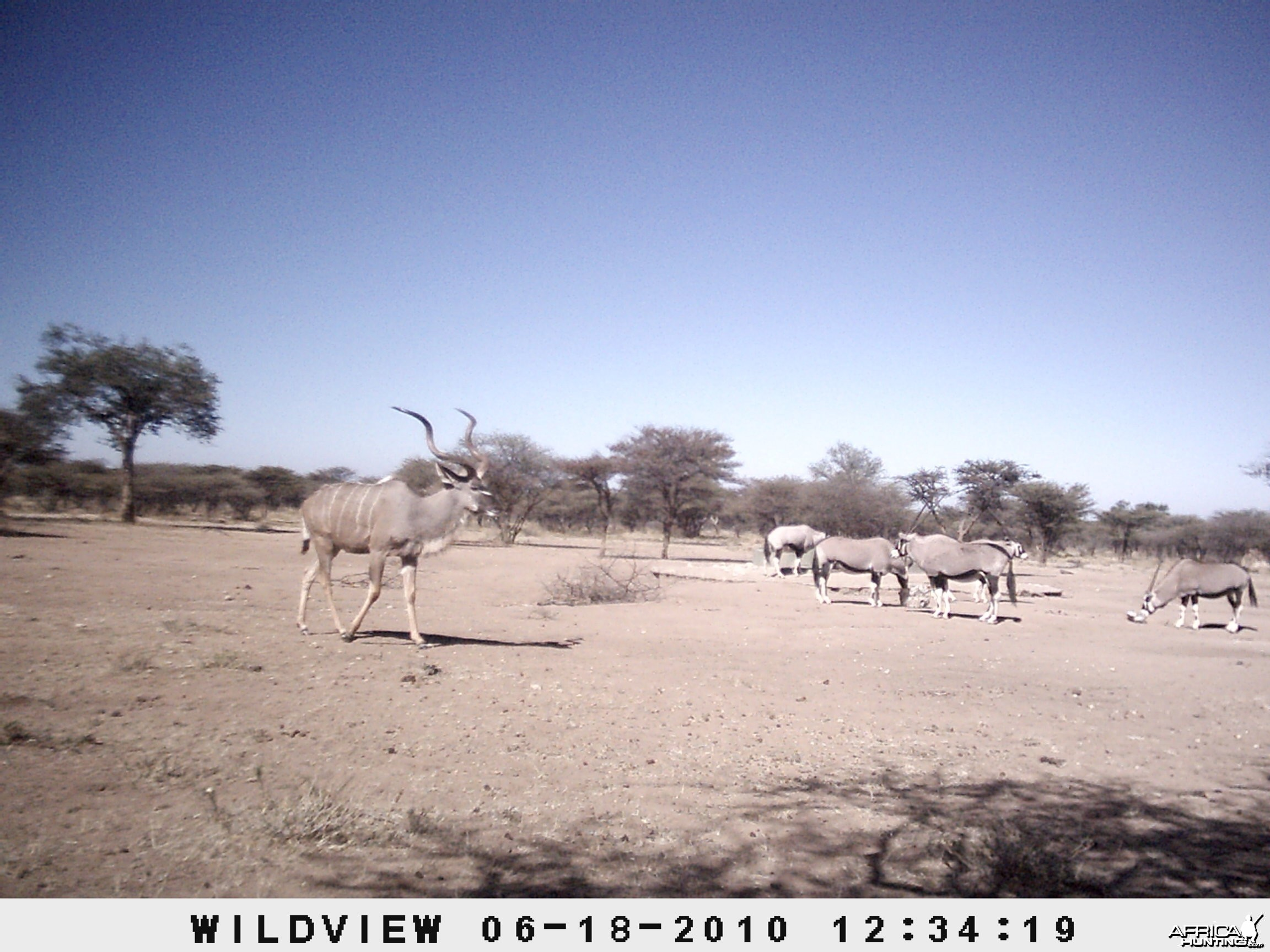 Kudu and Gemsbok, Namibia
