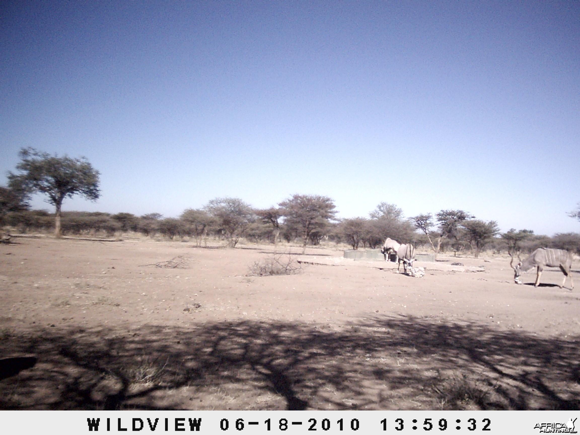 Kudu and Gemsbok, Namibia