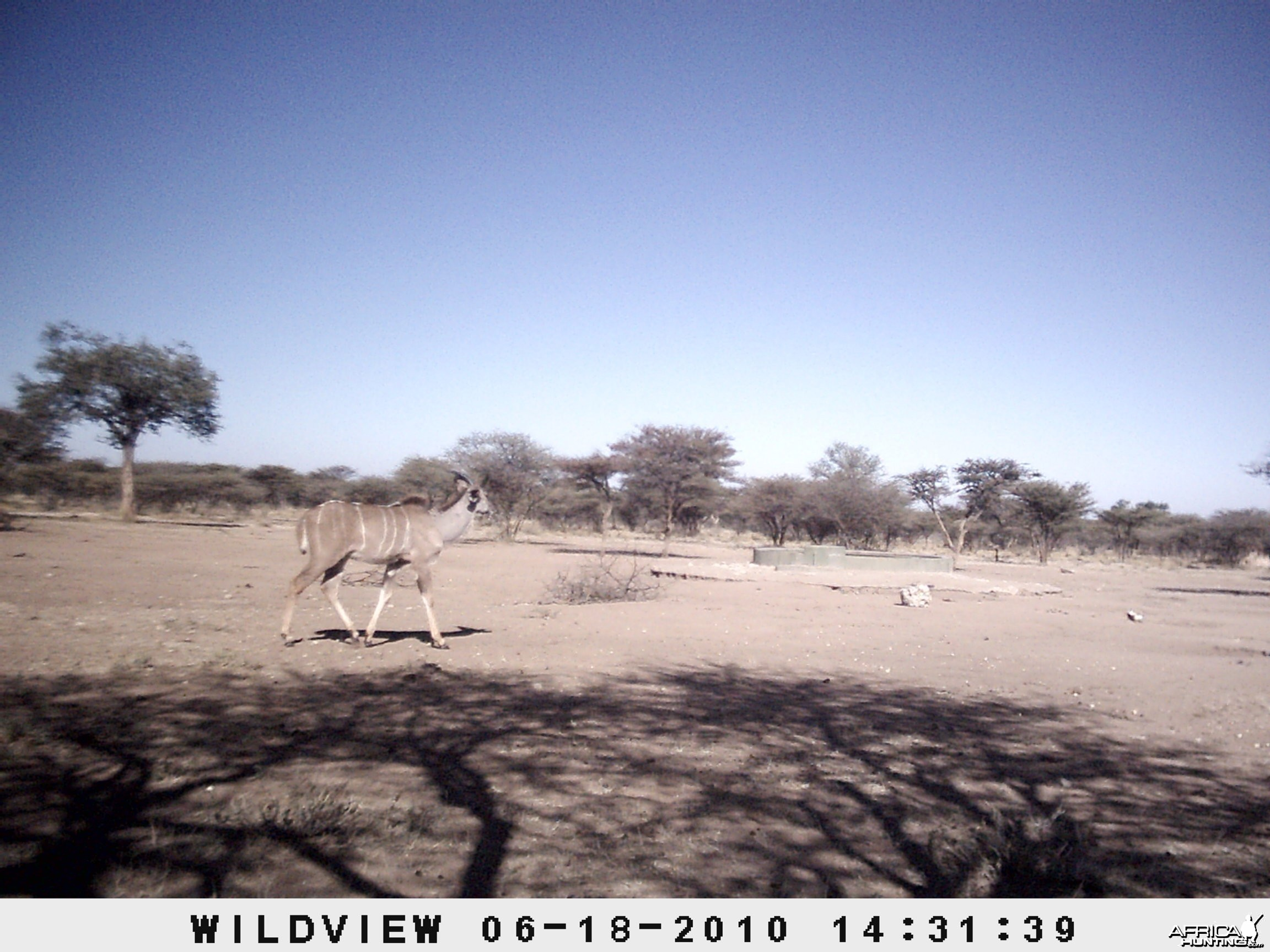 Kudu, Namibia