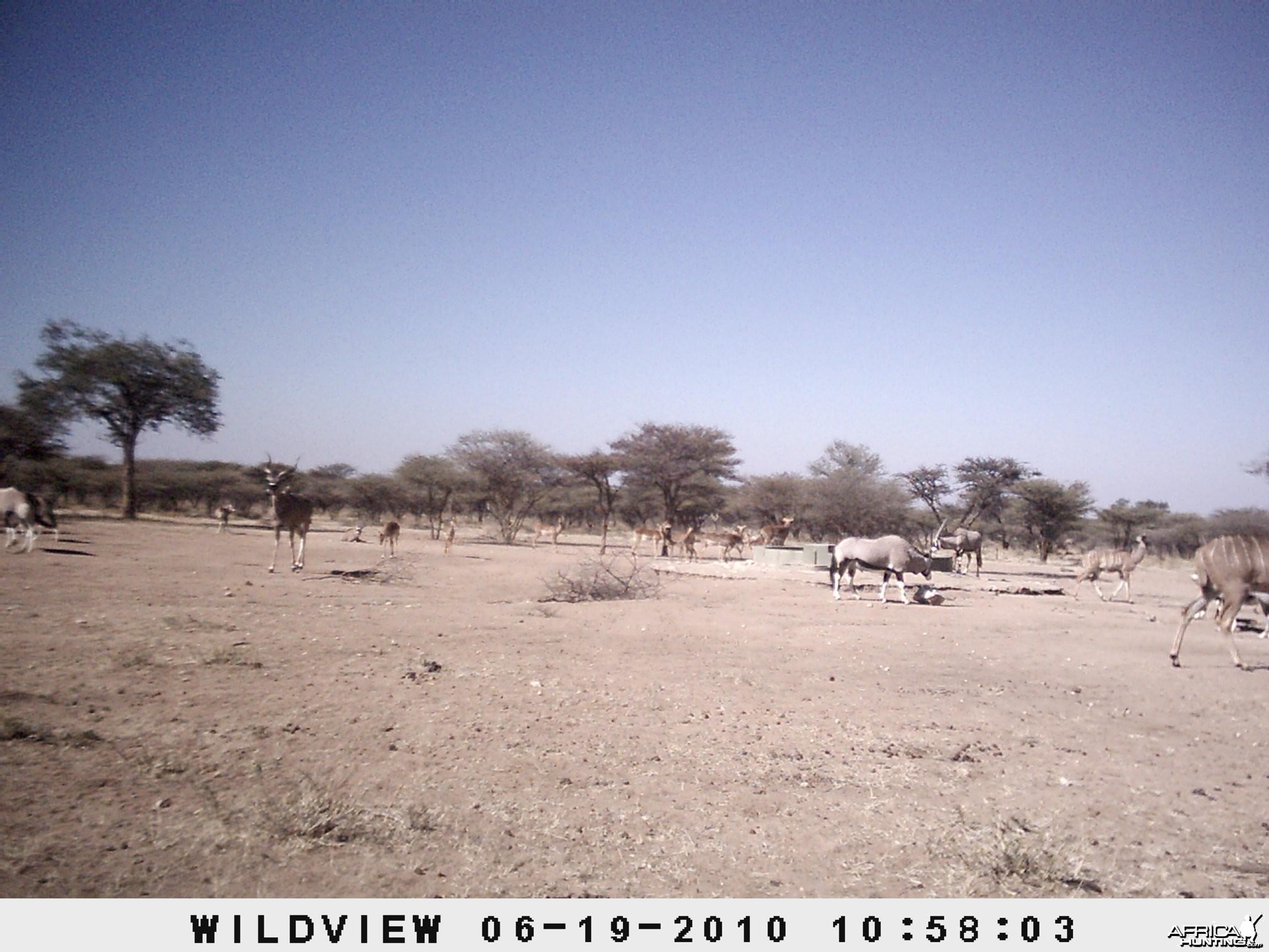 Kudu, Impala and Gemsbok, Namibia