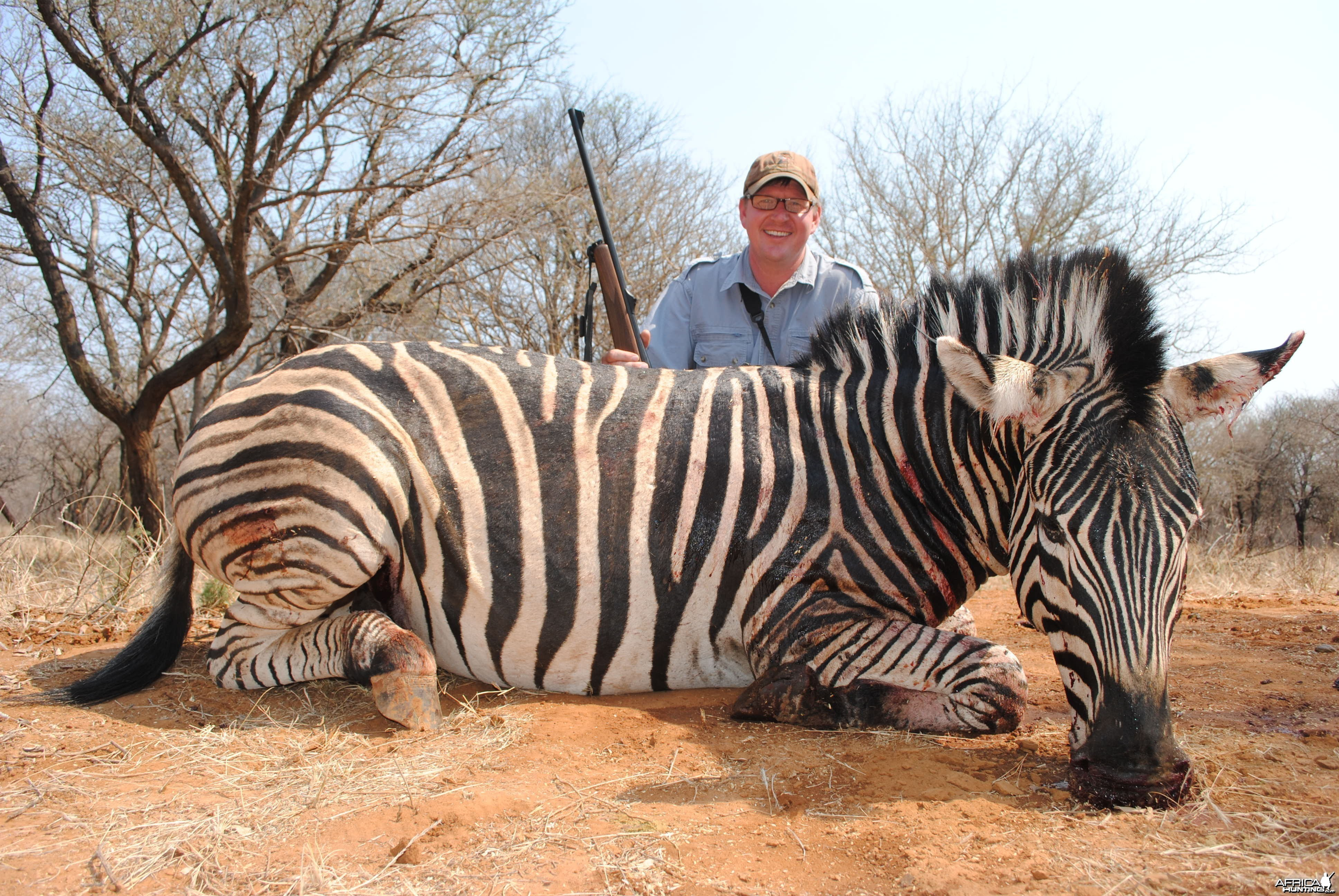 Zebra Hunted in South Africa