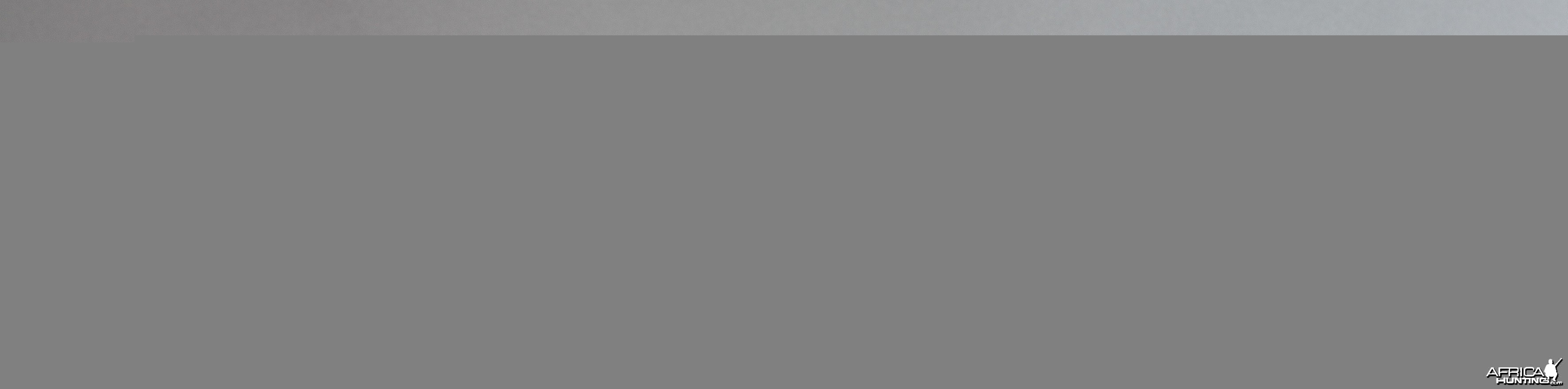 Azur Safari Eloge Double Rifle by Verney-Carron with Buffalo Engraving