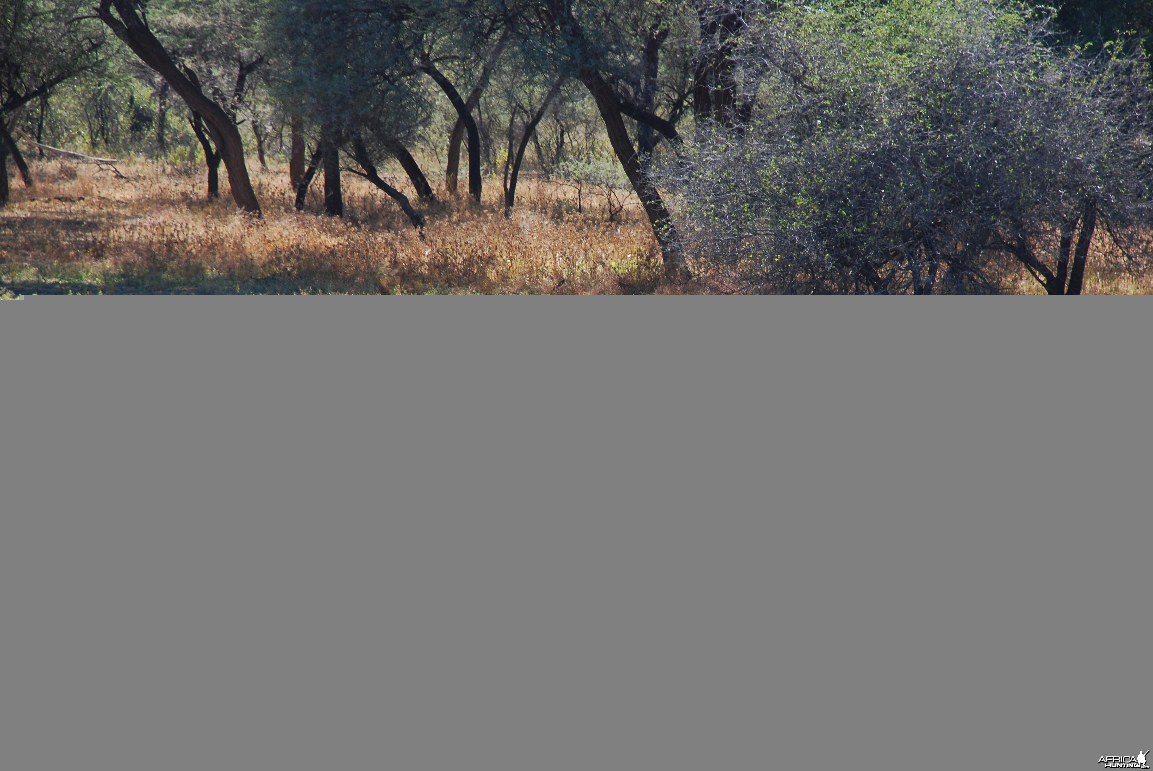 Blue Gnu Namibia