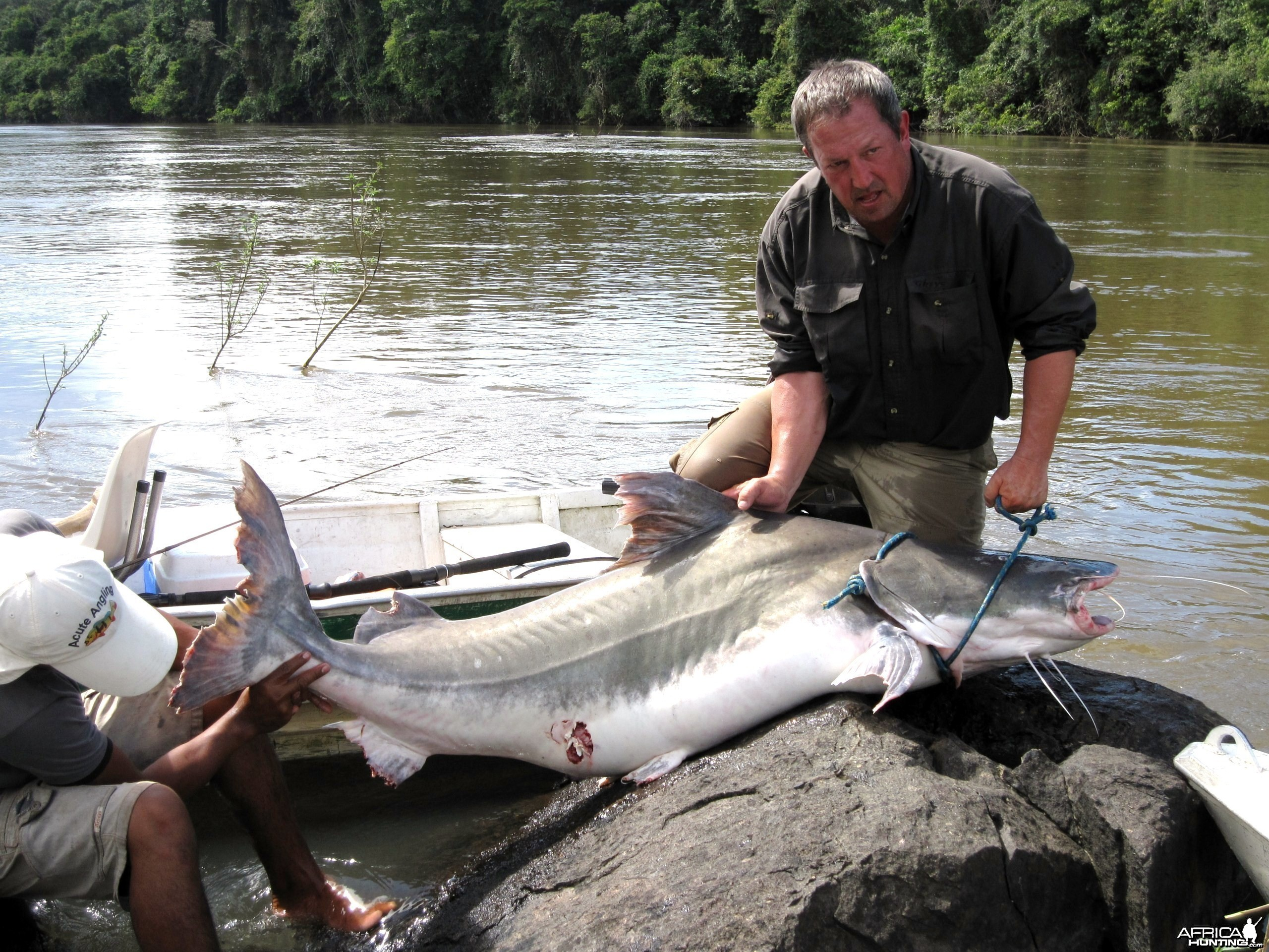 Piraiba catfish from the Amazon