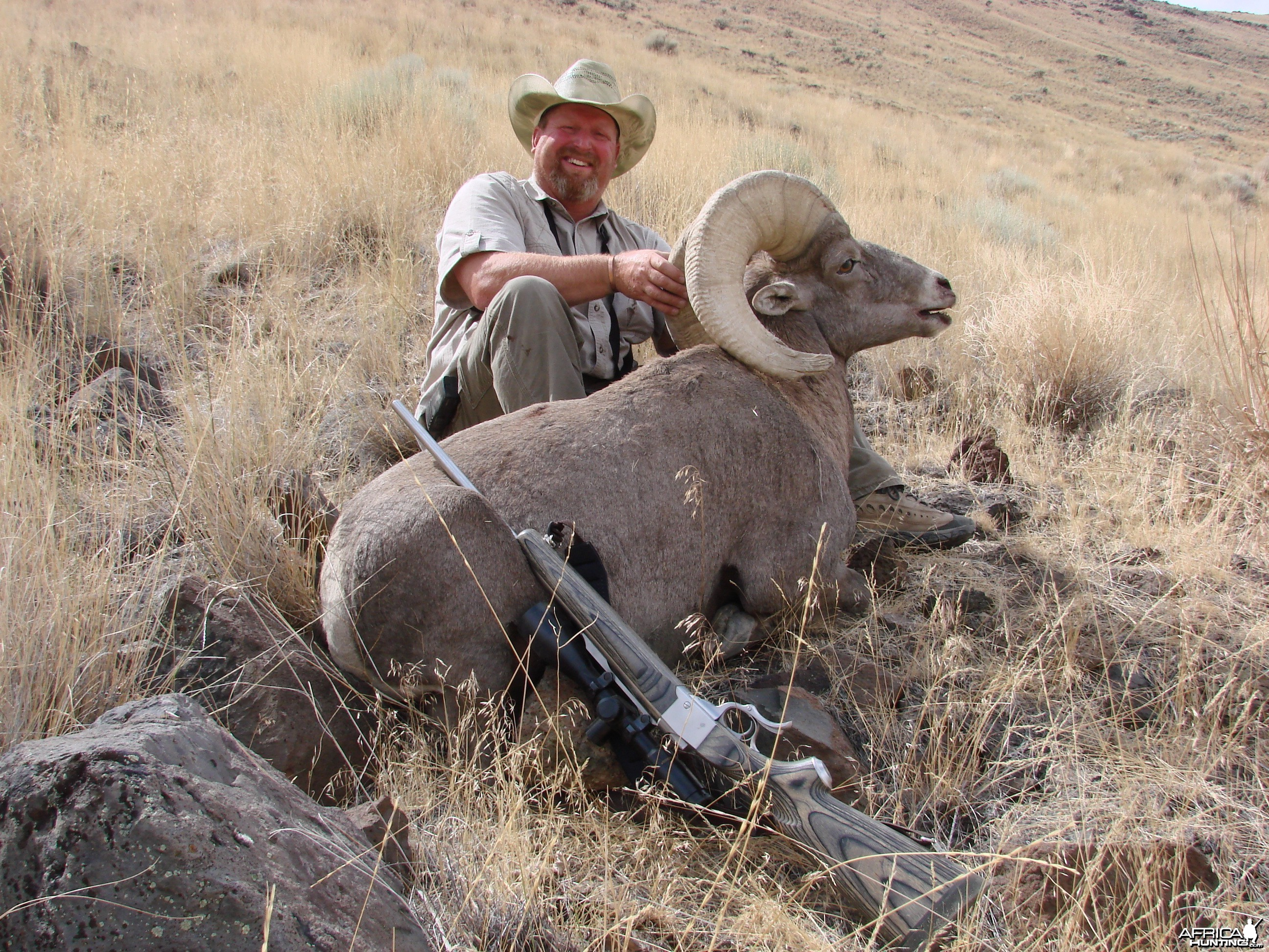 Owyhee Bighorn Sheep