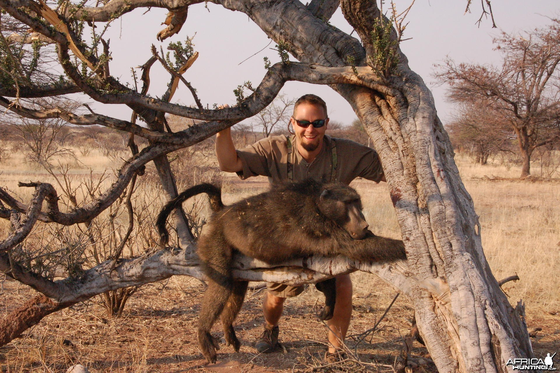 Chacma Baboon hunted in Namibia