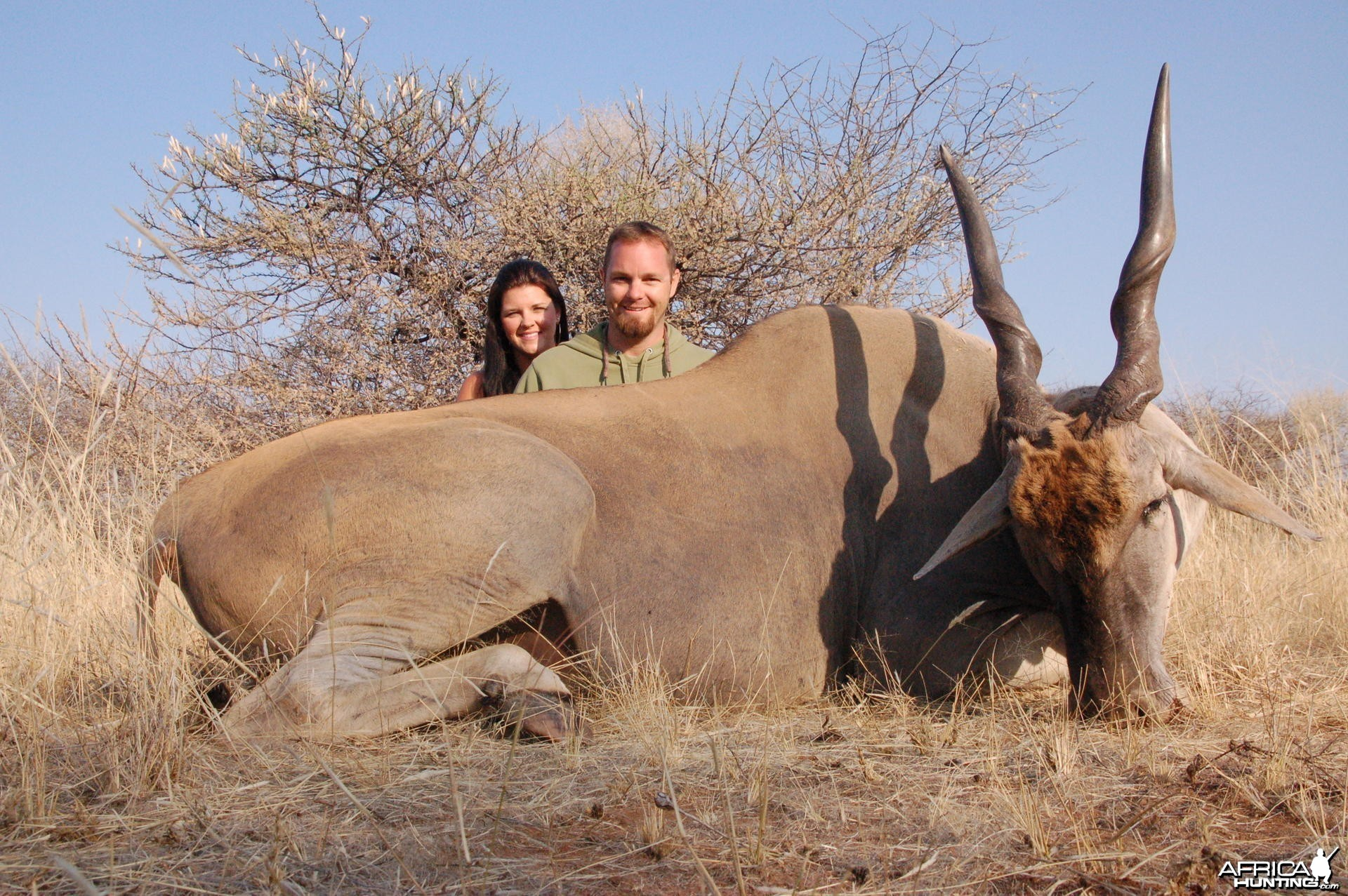Cape Eland hunted in Namibia