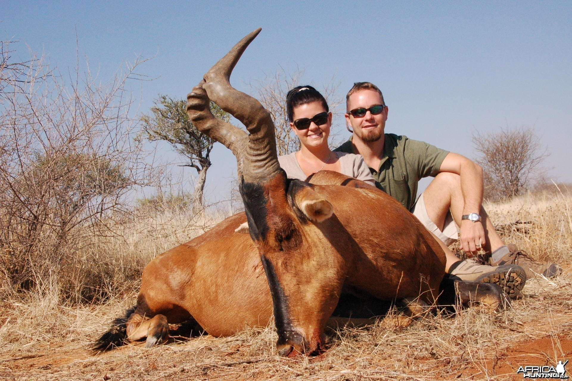 Red Hartebeest hunted in Namibia