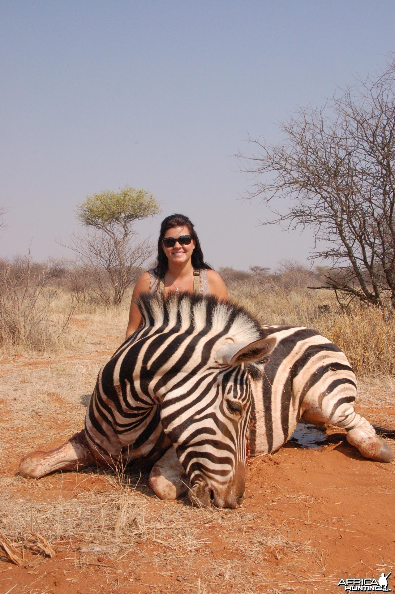 Burchell's Zebra hunted in Namibia