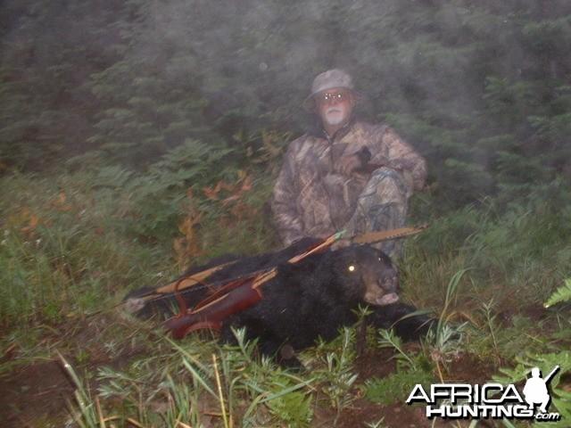Bear meets Buffalo Bow, Idaho
