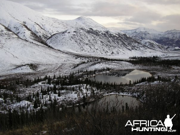 Hunting Moose and Grizzly in Alaska