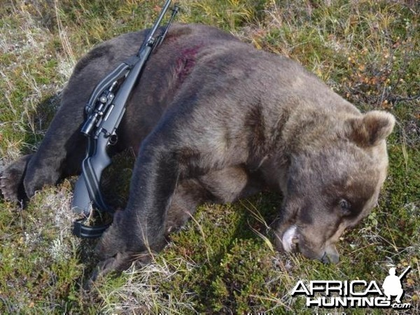 9 foot 2 Brown Bear hunt in SW Alaska with a 27 and 7/16 inch skull