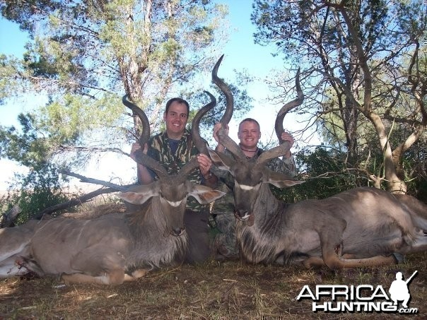 Two Eastern Cape Kudu 1 min apart