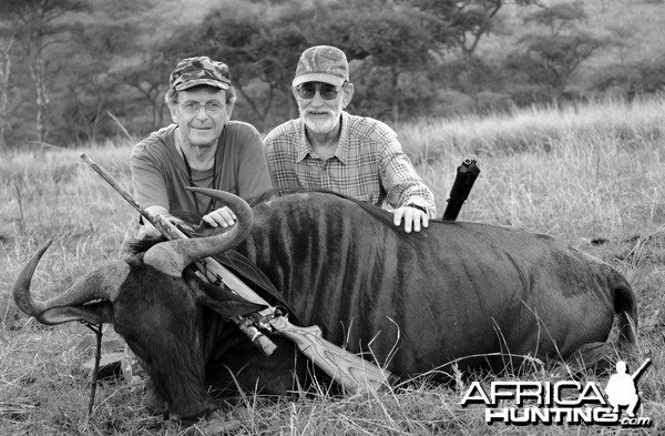 Blue wildebeest hunted in South Africa