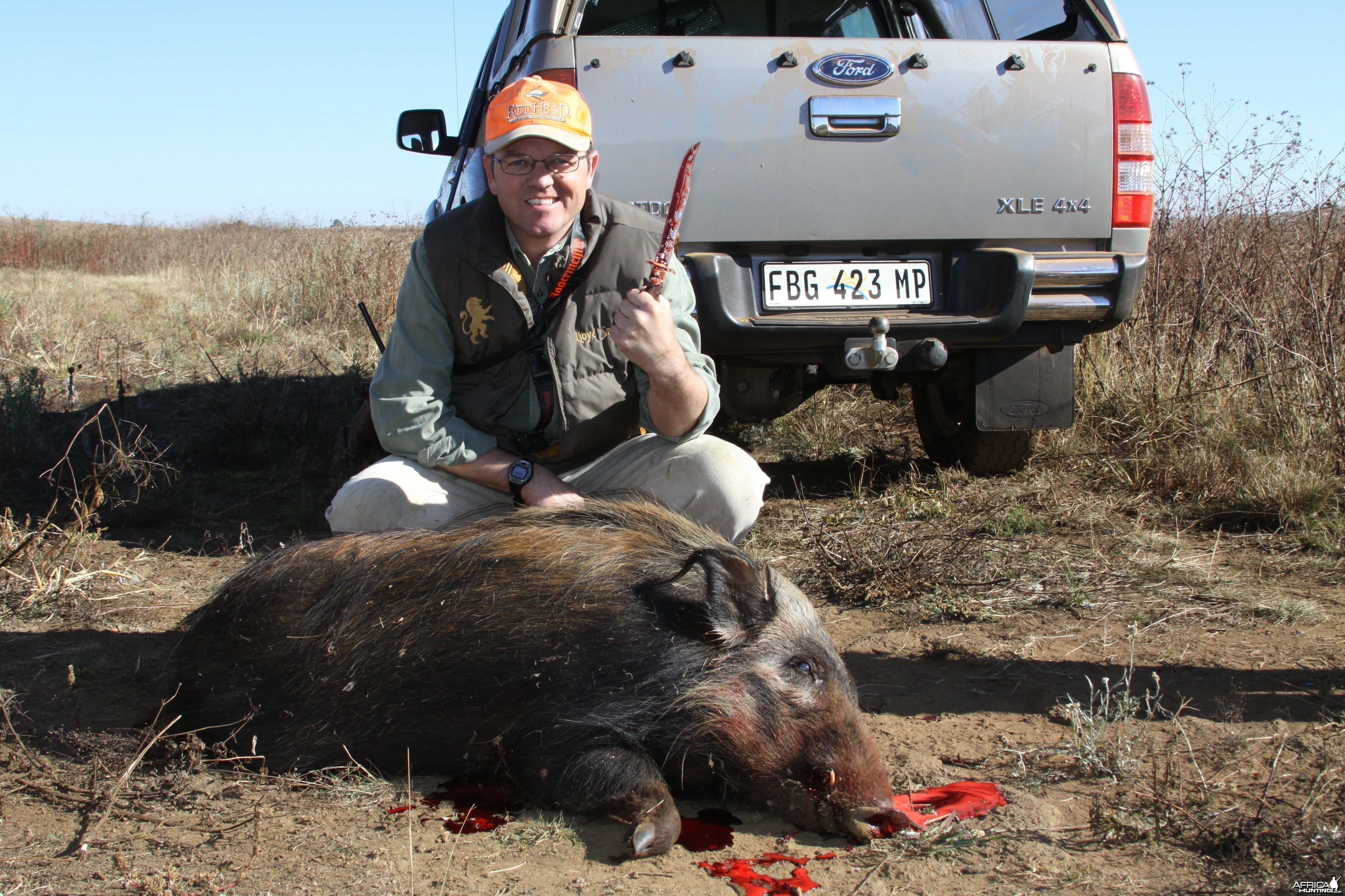 Bushpig hunting with hounds in South Africa