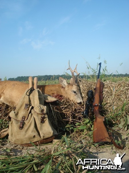 Roe deer hunt, Croatia