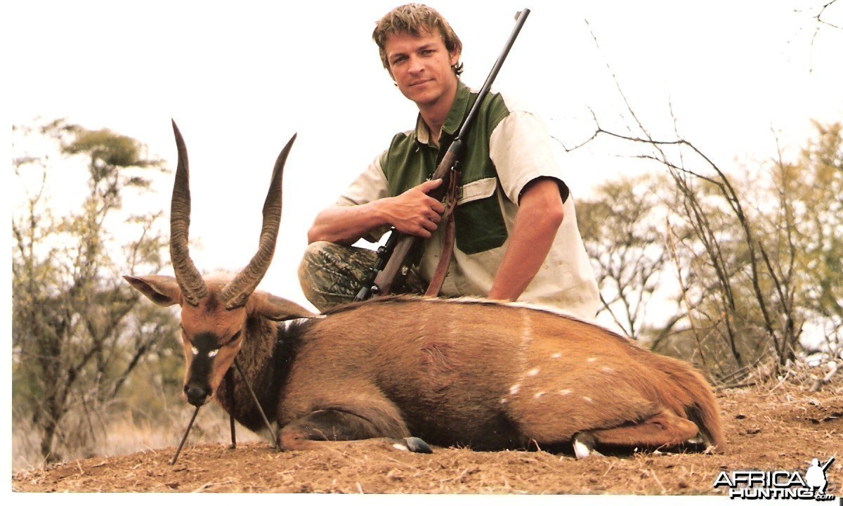 17 inch Limpopo Bushbuck