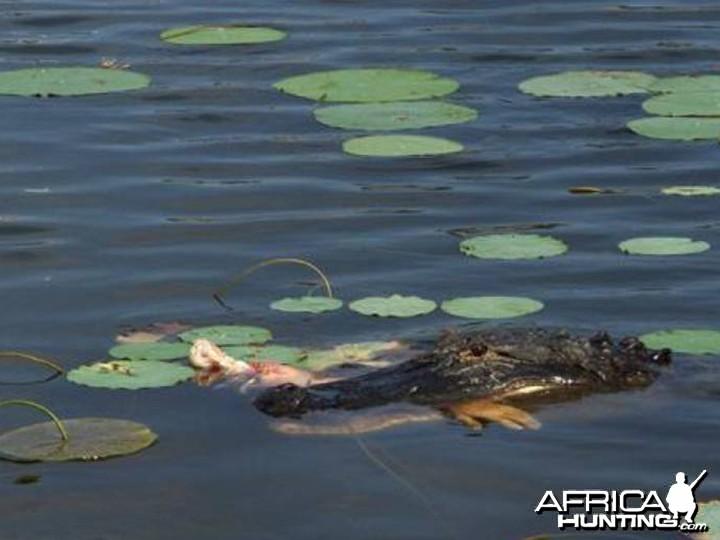 Croc Attack