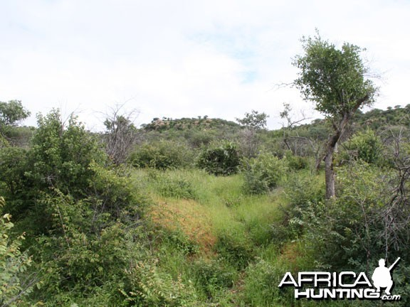 Nambia Landscape