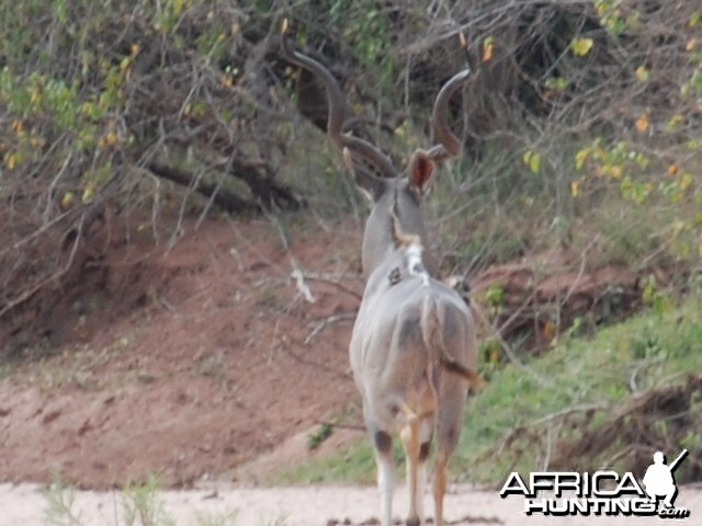 Kudu field judged at 57""