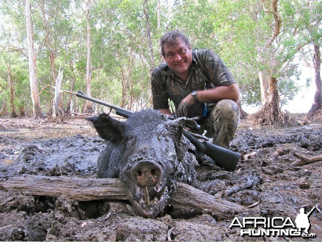 A 105kg Wild Boar from outback Australia died wallowing in his mud bath